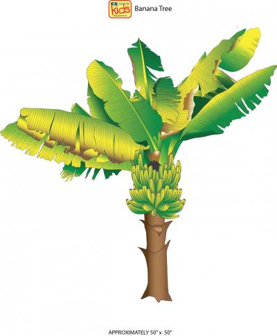 18 Cc Banana Tree Spec