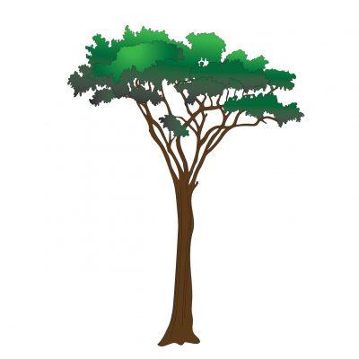 Acacia Tree Wall Sticker