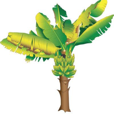 Banana Tree Wall Sticker