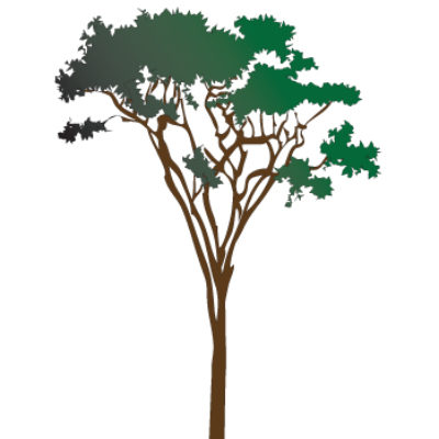 Acacia Tree Wall Sticker